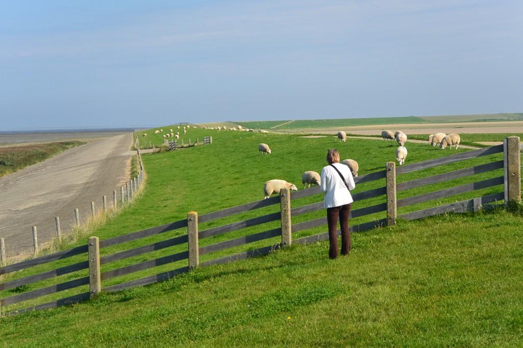 Nina flashing the sheep. The were not impressed.